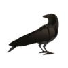 Gustav, decorative Raven by ibride